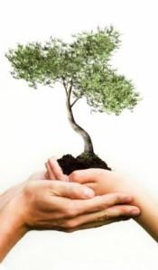 holding_ornamental_tree_stock_photo_169080